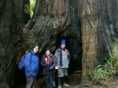 In the Santa Cruz Redwoods with my brother and sister-in-law.