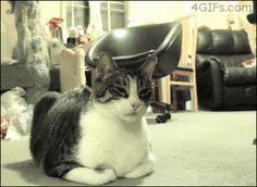 http://i.imgur.com/WkkMfqE.gif cat no fruit strawberry morango gato
