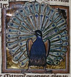 Medieval Bestiary : Peacock Gallery  Bodleian Library, MS. Bodley 764, Folio 84v