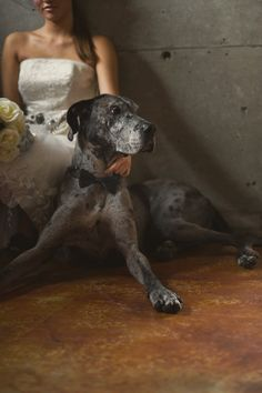 Black tie pup! Put a black bow tie on your dog on your wedding day!