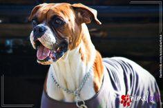 Tos de perreras. Artículo en animalart.mx