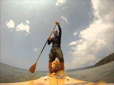 VIDEO _ Drake Bay Costa Rica Pup Dog Paddle Boarding.wmv