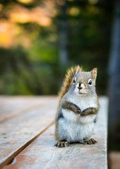 the animal theme is now the SQUIRREL.... (translated)  - vjeverice; катерици; 松鼠;  veverky; egern; eekhoorns; oravad; sciuroj; oravia; écureuils; Eichhörnchen; σκίουροι; mókusok; íkorni; tupai; scoiattoli; リス; bajing; 다람쥐; vāveres; tupai; ekorn; wiewiórki; esquilos;  veverițe; белки;  веверице;  veveričky; ardillas; ekorrar; กระรอก; sincap; білки; sóc.... lets hope you get it right....a.l.s