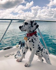 Dalmatian excited for a boat ride         #dog #dogs #cute #boat #ocean #dalmatian #dalmatianpuppy #puppy #dogsofinstagram #dogsofinsta