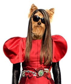 Fashion Animals - Anna della Russo, Anna Wintour, Alber Elbaz, Terry Richardson, Daphne Guinness...