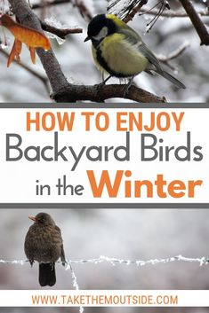Attracting birds in the winter Get some simple tips on how to invite birds to your backyard in the winter. Find out what to feed the winter birds, how to provide shelter for the birds, and how to enjoy them too. Nature Activities, Outdoor Activities, Winter Activities, Bird Identification, Bird House Kits, How To Attract Birds, Backyard Birds, Backyard Ideas, Bird Watching