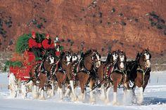Big Horses, Pretty Horses, Horse Love, Beautiful Horses, Animals Beautiful, Work Horses, Christmas Horses, Noel Christmas, Winter Christmas