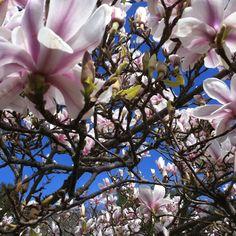 Spring! Bainbridge Island