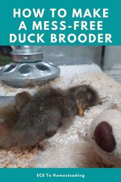 Backyard Ducks, Backyard Farming, Backyard Chickens, Duck Pens, Duck Duck, Duck Farming, Goat Farming, Pet Ducks, Baby Ducks