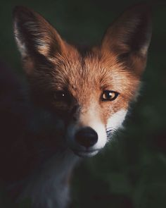 Photographer Captures Intimate, Soulful Portraits of Wild Forest Animals - My Modern Met Forest Creatures, Woodland Creatures, Forest Animals, Woodland Critters, Woodland Animals, Wild Animals Photography, Wildlife Photography, Beautiful Creatures, Animals Beautiful