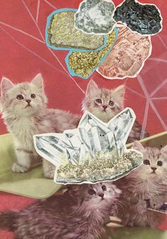baby kitties and natural gemstones... an unexpectedly delicious rock pairing