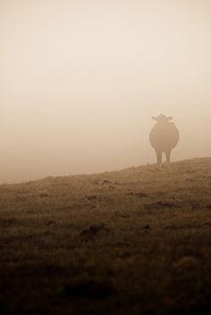 Morning Fog