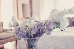 White and lilac