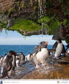Penguins love water