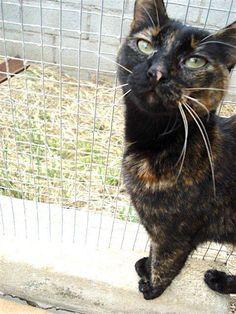 Helfende Hände e.V. - Katze Tessy (EKH 3 Jahre) sucht ein Zuhause   Steckbrief…