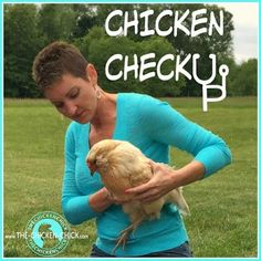 Regular physical exams for chickens are important to their health and longevity because they are masterful at hiding pain, discomfort and weakness. Chicken To Go, Chicken Life, Chicken Chick, Chicken Runs, Chicken Coops, Chicken Breeds, Keeping Chickens, Raising Chickens, Baby Chickens