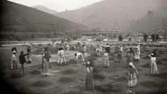 - Slavery in Brazil / this is a photography exhibition of slavery in Brazil / Slaves at a coffee yard in a farm. Vale do Paraiba, Sao Paulo, Native American Population, World History Facts, History Images, Bbc, Afro, South American Countries, Foto Real, Photography Exhibition, Rio De Janeiro