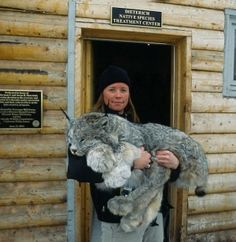 Lynxes Are Gorgeous