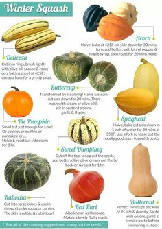 Great quick reference guide for how to prepare different types of squash. - Great quick reference guide for how to prepare different types of squash. Vegetable Recipes, Vegetarian Recipes, Healthy Recipes, Cooking Tips, Cooking Recipes, Courge Spaghetti, Squashes, Food Facts, Vegetable Dishes