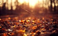 Image result for autumn wallpaper