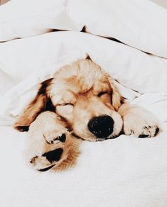 Cute puppies golden retriever aesthetic golden retrievers, cute creatures, animals and pets, baby Cute Puppies Golden Retriever, Golden Retrievers, Retriever Puppy, Cute Baby Animals, Animals And Pets, I Love Dogs, Cute Dogs, Cute Creatures, Dogs And Puppies