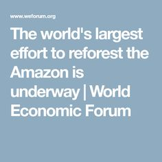 The world's largest effort to reforest the Amazon is underway | World Economic Forum