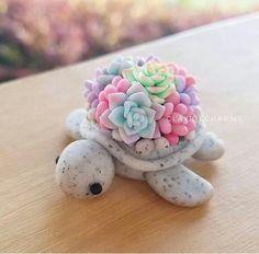 Polymer clay turtle seaturtle tortoise kawaii succulents