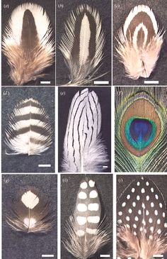 The 9 types of feather patterns. Types Of Feathers, Air Fire, Feather Pattern, Owl Bird, Compare And Contrast, Nature Journal, Science Art, Creature Design, Fiber Art