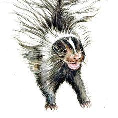 Baby Skunk Original Watercolor Painting.  via Etsy.