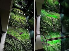 A three story indoor vertical garden in Elche, Spain. Considered to be Spain's largest and also works to clear the air of indoor office pollutants.