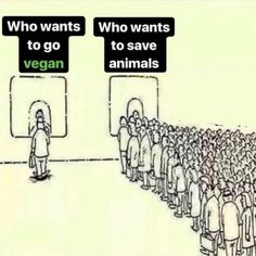 If you really want to save animals from the horrors of factory farming and eat a. If you really want to save animals from the horrors of factory farming and eat a diet that is eco friendly and far healthier go vegan plantpowerz Vegan Facts, Vegan Memes, Vegan Quotes, Videos Kawaii, Factory Farming, Why Vegan, Stop Animal Cruelty, Vegan Animals, Save Animals