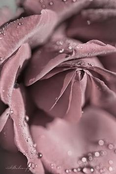 """~ Spring Pirouettes ~ """". . . from blossom to blossom to impossible blossom, to sweet impossible blossom."""" ~ Li-Young Lee"""