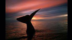El alemán Armin Maywald acampó durante cinco semanas para captar esta imagen en la Península de Valdés, en Argentina (Foto: Armin Maywald / Wild Planet)