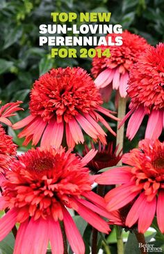 Top New Sun-Loving Perennials for 2014. I can't wait for spring to try a few of these out!