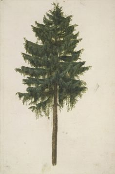 23 Dec: This striking study of a spruce tree is one of Dürer's finest watercolours