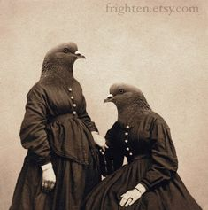 awesome bird head vintage photos. or vintage photos turned into bird heads? who cares, they're pretty sweet.