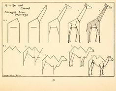 draw animals straight lines drawing using domain drawings animal line step c1913 lutz visit