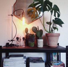 Showing off my new Kemikaze lamp - and some mickey mouse cactus + one monstera.