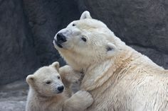 Motherhood by Olga Gladysheva - Photo 7100319 - 500px