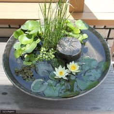 Beautiful collection of different aquatic plants in a low water bowl. See more great ideas @ www.ContainerWaterGardens.net