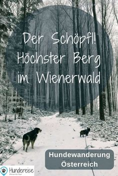 Wanderlust, The Great Outdoors, Hiking, Dogs, Movie Posters, Animals, Roadtrip, Austria, Hotels