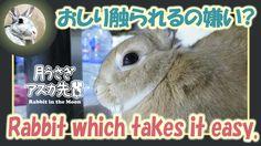 おしり触られるの嫌い?【ウサギのだいだい 】Rabbit which takes it easy. 2016年5月3日