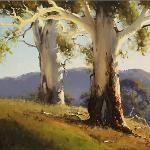 Gums near Brungle NSW - 60 x 45 © Copyright John Wilson