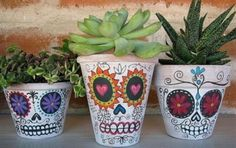 vasos de plantas - caveira mexicana