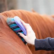 Useful grooming tips and tricks EVERY horse lover should know!