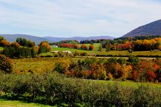 The rolling landscape of Massachusetts' Berkshires region comes alive with vibrant color each autumn