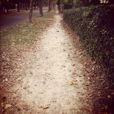 Today ~ Looks like autumn #photoadayaug #path #endofsummer #deadleaves - @din0u- #webstagram