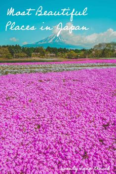 10 Most Beautiful Places in Japan! Planning a trip to Japan? There are so many things to do in Japan that you have probably never heard of! This Japan travel guide will help you plan your trip and find all the best things to do in Japan. #Japan #japantravel #beautifulplaces #travelinspiration #asiatravel Japan Travel Guide, Asia Travel, Beautiful Places In Japan, Most Beautiful, Japan Japan, Plan Your Trip, Brunei, Laos, Places To See
