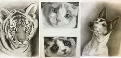 Drawing animals for beginners; tips from Lee Hammond at ArtistsNetwork.com