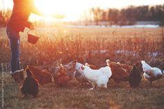 Feeding time by Melanie DeFazio #stocksy #realstock